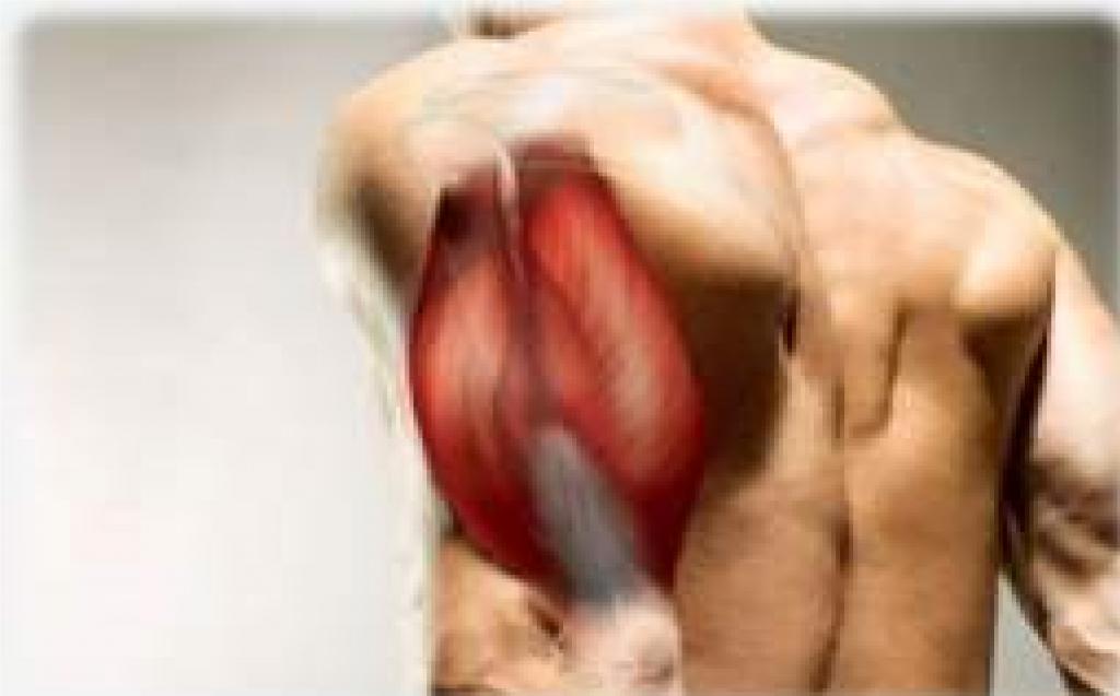 calistenia brasil biceps